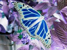 Silver & Blues( is this real?) What kind of butterfly or moth is it I wonder? Butterfly Kisses, Butterfly Flowers, Blue Butterfly, Butterfly Wings, Purple Flowers, Butterfly Pictures, Monarch Butterfly, Flying Flowers, Butterflies Flying