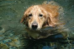 She was a good swimmer.
