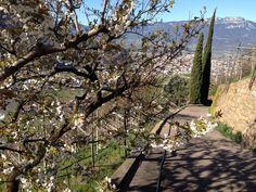 Springtime at the estate Premstallerhof