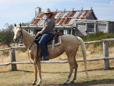 Day ride to Craig's hut $AU300