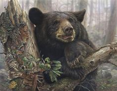 """Stunning Wildlife Paintings by Denis Mayer Jr.                                                            """"Home Sweet Home"""".                                         Vancouver, Canada."""