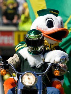 The Oregon Duck riding the motorcycle at Autzen Stadium.