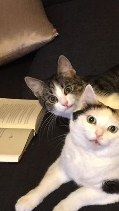 #Cats  #Cat  #Kittens  #Kitten  #Kitty  #Pets  #Pet  #Meow  #Moe  #CuteCats  #CuteCat #CuteKittens #CuteKitten #MeowMoe      After i sneezed ...   https://www.meowmoe.com/60399/