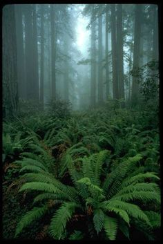 maybe add rain drops to the ferns and fade out more to create the illusion of mist