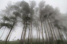 Misty Forest at Puncak Lawang, West Sumatra. Indonesia