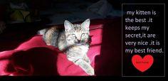 Photo: moi et mon chaton souder a jamais