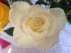 Cream-white rose: Take 2 Cream White, White Roses, Girly, Flowers, Plants, Beautiful, Women's, Girly Girl, Plant