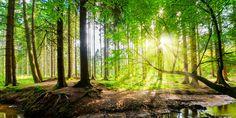 Wald mit Sonne