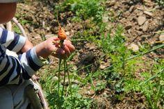 Familienjahr: Der Anfang von einem neuen Gartenprojekt Enorm, Monat, Gardening, Green, Seasons Of The Year, Plants, Tips, Lawn And Garden, Horticulture
