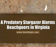 A Predatory Stargazer Alarms Beachgoers In Virginia Heaven Pictures, Rain Pictures, Snoopy Pictures, Sunrise Pictures, Mother Pictures, Night Pictures, Morning Pictures, Life Pictures, Dance Pictures