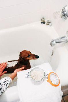 DIY natural pet spa // natural oatmeal dog shampoo #BeyondPartners