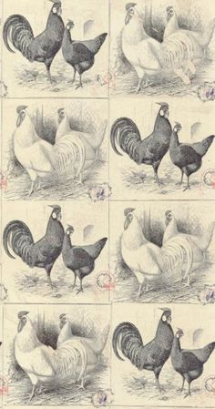 Chicken Run (LW1457/1) - Linwood Wallpapers - A wallpaper featuring motifs with old-fashioned postcard style images of chickens in black and white, which will create a tile effect when hung. Please request a sample for a true colour match. Paste-the-wall product. Pattern repeat is 99cm.