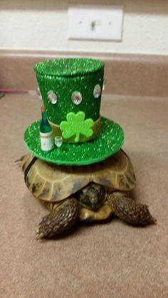 Fascinator Tortoise Hat Pet Hat Valentine's by DeerwoodCreekGifts