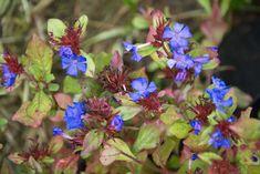 25 talajtakaró növény, melyekkel gyönyörűvé teheted a kertet!