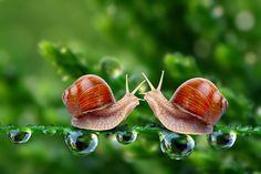 Snail | snail love category macro size 3000 x 2000 keywords snail love viewed ...