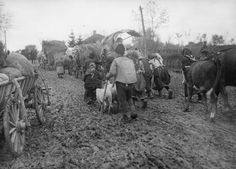 THE RETREAT OF THE SERBIAN ARMY TO ALBANIA,  1915    Serbian refugees on the road during the retreat to the Adriatic Sea coast, December 1915.