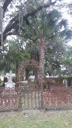 Magnolia Cemetery, Charleston, SC Crumbling antique statuary and Lush foliage abound.