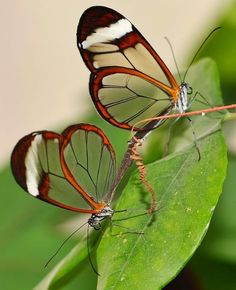 Share your photos and win prizes Most Beautiful Butterfly, Beautiful Bugs, Butterfly Kisses, Butterfly Art, Beautiful Creatures, Animals Beautiful, Butterfly Information, Butterfly Pictures, Unusual Animals