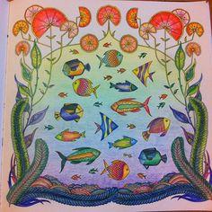 はじめての大成功♡  #コロリアージュ #おとなのぬりえ #大人の塗り絵 #海の楽園 #ジョハンナバスフォード #coloring #coloriage #johannabasford #lostocean