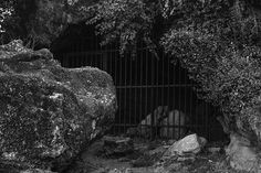 Prison ___ #photography #photo #light #nikon #nikond3300 #nikontop #nikonfamily #vsco #autohash #tree #outdoors #monochrome #nature #stone #cave #prison #rock