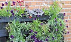 Vælger man at fylde pallen med stauder og sommerblomster, kan man få glæde af det farverige syn fra maj til november. Foto: PR