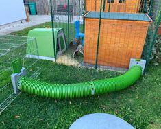 Zippi Rabbit Tunnel System | Omlet Large Rabbit Run, Large Rabbits, Indoor Rabbit Cage, Rabbit Cages, Rabbit Tunnel, Rabbit Habitat, Rabbit Enclosure, The Burrow, Rabbit Hutches