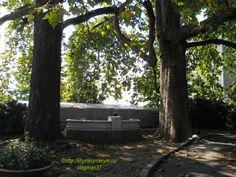 Два старых платана возле корпуса Фредерикса (санаторий «Ливадия»)