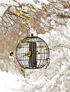 Mixed Seed Globe Cage Feeder. Brilliant--a squirrel-resistant feeder that looks beautiful!