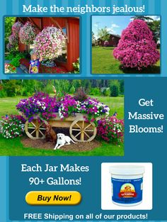 Beat Your Neighbor all purpose plant food and fertilizer for flowers, plants and vegetables. The absolute BEST plant food and fertilizer. Grow like the pros and have a beautiful garden and flowers. Container Gardening, Gardening Tips, Organic Gardening, Vegetable Garden, Garden Plants, Plant Crafts, Strawberry Plants, Lawn And Garden, Amazing Flowers