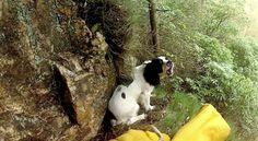It's a cliffhanger for rescued dog Panda Bear, Rescue Dogs, Animals, Animales, Animaux, Panda, Animal, Animais, Pandas