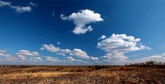Autumn Landscape ...  autumn, blue, clouds, field, flower, grass, landscape, lawn, meadow, sky, timelapse, tree, yellow