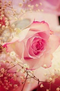 Bahar gelmeye mecbur..Çiçek açmaya.. Güneş doğmaya mecbur..Yağmur yağmaya.. Dallar tomurcuğa..Arılar bala.. Ben yaşamaya...Yaşamak sana...  (Adem)