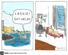 Get help, Lassie!