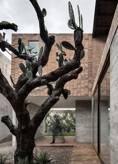 Clay bricks that form a pixellated pattern clad this Mexican house, which AS/D Asociación de Diseño has arranged around a cactus tree.