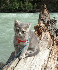 #cathaiku  Am sad. Very sad.  The clear liquid touched my tail.  It is wet now. *sigh*  #campingwithcats @jessie.and.koda
