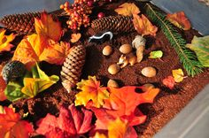 Fall Forest Sensory Box from This Girl's Canon