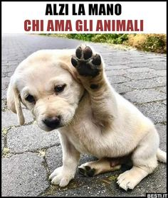 Alzi la mano