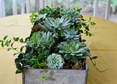 Set a rustic centerpiece of stunning succulents on your table this fall. Learn more easy tablescape ideas at The Home Depot's Garden Club.