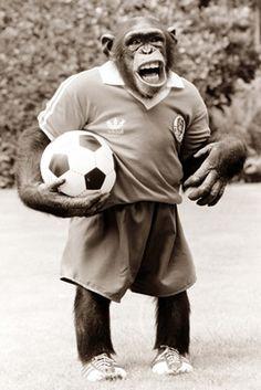 Monkey playing football on Art247.com