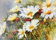 Marney Ward | Marguerite Daisies! Beautiful! Love the colors and detail midst the blurred background!