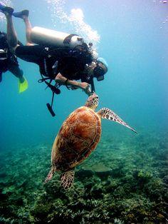 Diver with turtle in Sipadan Island, Malaysia
