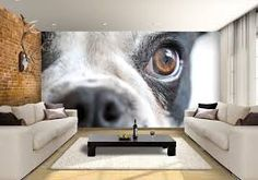 Image result for boston terrier wall mural