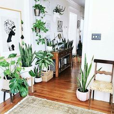 This is what we'd call a green hallway Did you know that the leaves of Sansevieria (also known as snake plants) stop growing when you break off the spiky top? :@houseofsixinteriors #urbanjunglebloggers