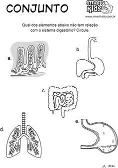 Atividade Sistema Digestório Conjunto
