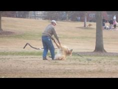 Stubborn Dog Plays Dead To Stay In The Park Longer – So Funny! (VIDEO)