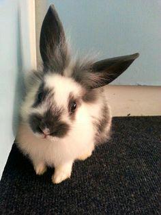 Beautiful long ears!