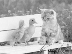 268 Beste Afbeeldingen Van Kleurplaten Katten