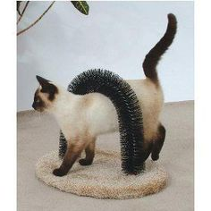 Self-groomer for cats.This is genius!! Wish I knew where to get a long piece of cylinder brush. This would be easy to make.