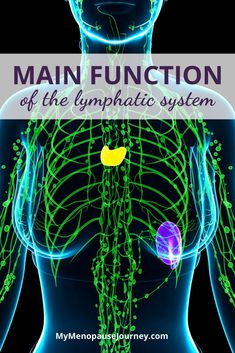 Boost Lymphatic System Functions | It flushes out toxins, balances fluids, and protects the body against diseases – the lymphatic system is the body's very own natural waste drainage system! Learn more about it functions and how to manage it. What is the lymphatic system? // Lymphatic system functions // The role of the lymphatic system in the body #DrainBodyToxins #CleanLymphaticSystem #UnblockLymphaticHealth Menopause Signs, Menopause Symptoms, Menopause Age, Lymphatic Massage, Hormone Replacement Therapy, Muscle Anatomy, Lymphatic System, Hormone Imbalance, Body Systems