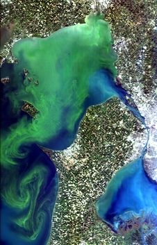 Algal blooms are about more than cleaning your fish tank — they can jeopardize water safety. NASA astronauts in space are helping scientists on Earth monitor an algal bloom in Lake Erie.